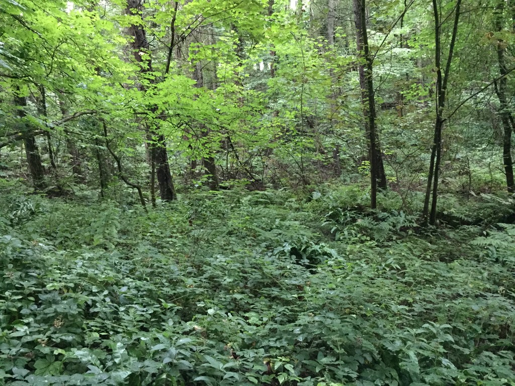 Approx 15.4 acres of land at Coed y Tor, St Hilary, CF71 7DP