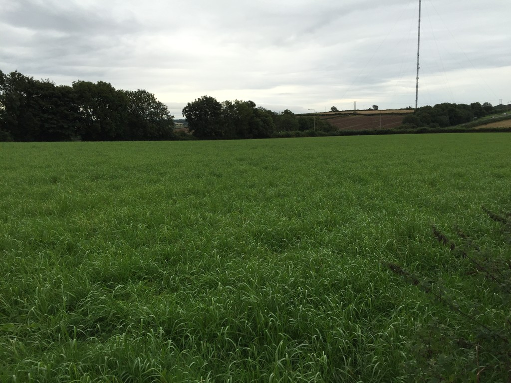 Approximately 4.92 acres of land at St Hilary, Vale of Glamorgan,  CF71 7DT