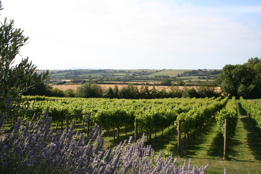 Portesham Vineyard