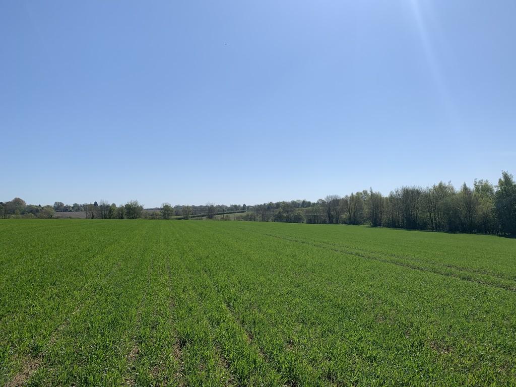 Stonecross Green, Whepstead property photo