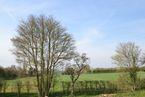 Plot 1 - Chestnut Rise, Mow Hill, Witnesham, Suffolk, IP6 9EH