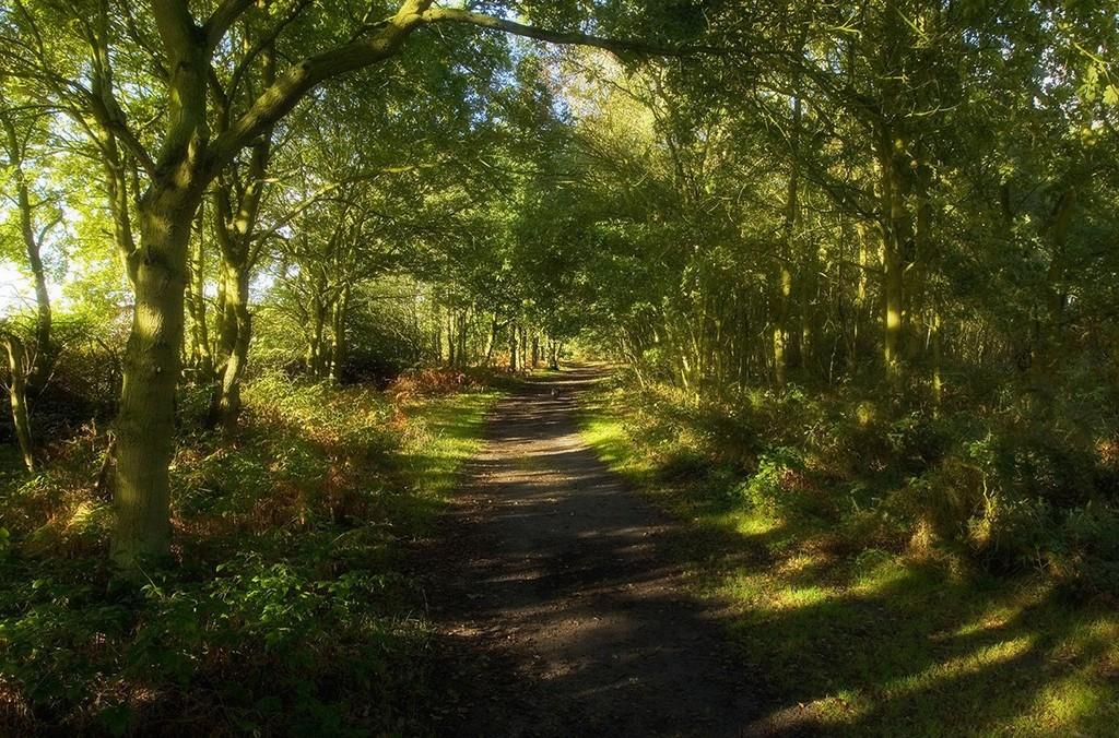 Maldon Road, Tiptree Heath