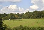 Boreham Road, Great Leighs, CM3 1PR