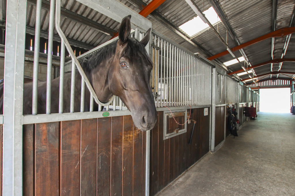 Equestrian To Rent - Image 22