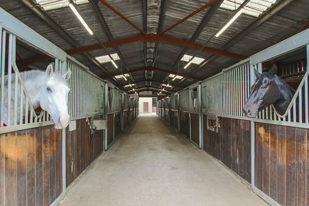 Equestrian To Rent - Image 1