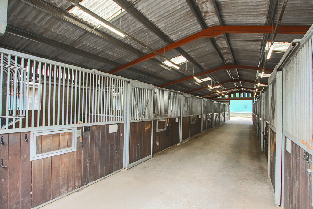 Equestrian To Rent - Image 16