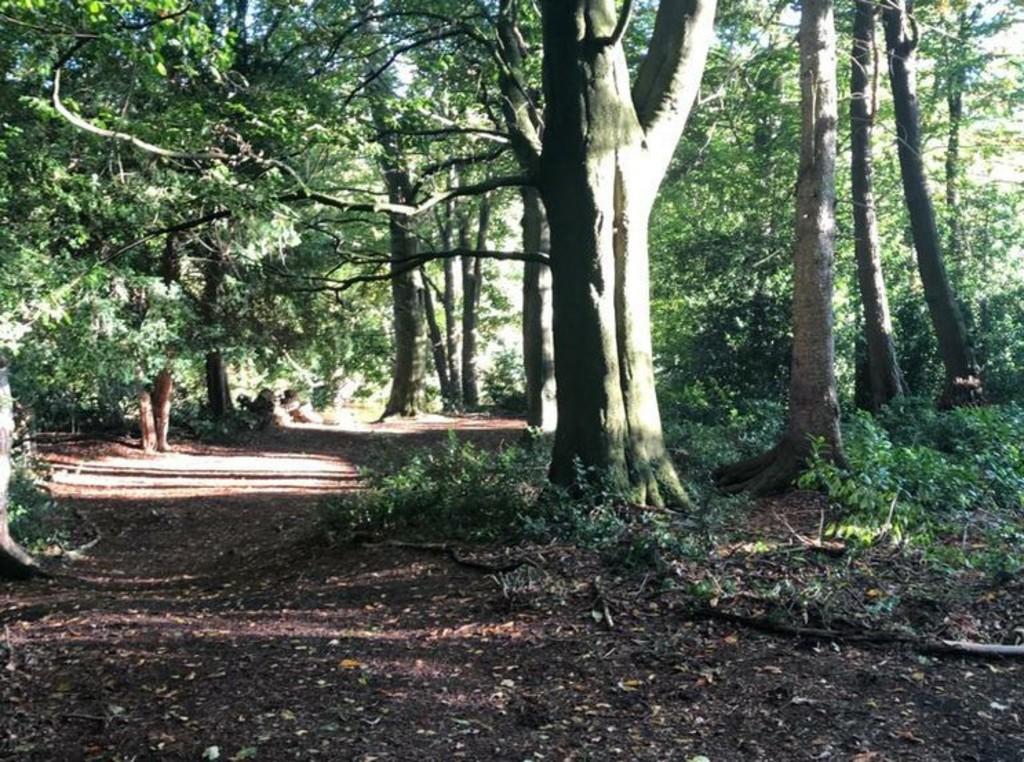 Riverside Wood, Rowlands Gill