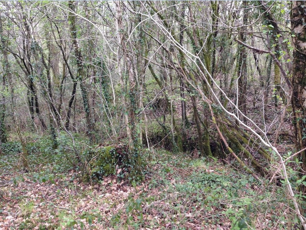 Approx 0.52 Acres of Land at Llety Brongu, Maesteg, CF34 0EB