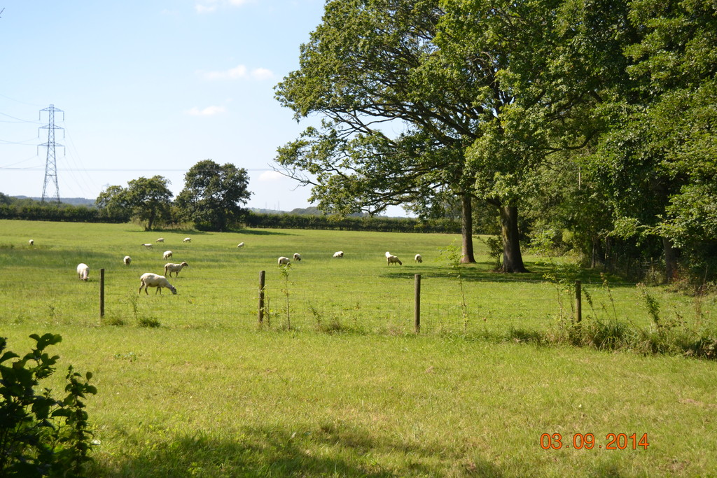 Approx. 5.77 acres of land part of Oakways Farm, Peterston Super Ely, Vale Of Glamorgan, CF5 6NE