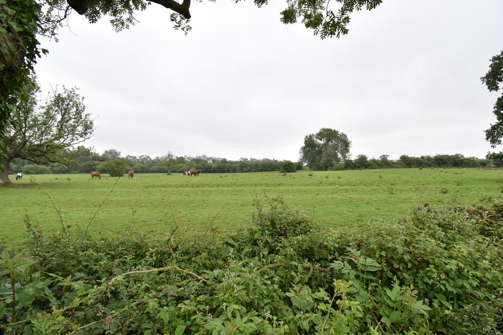 Property Image 61